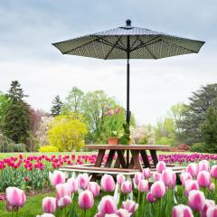 Poly octagon table in a tulip field