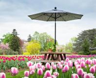 Poly picnic table with an umbrella in a tulip field.